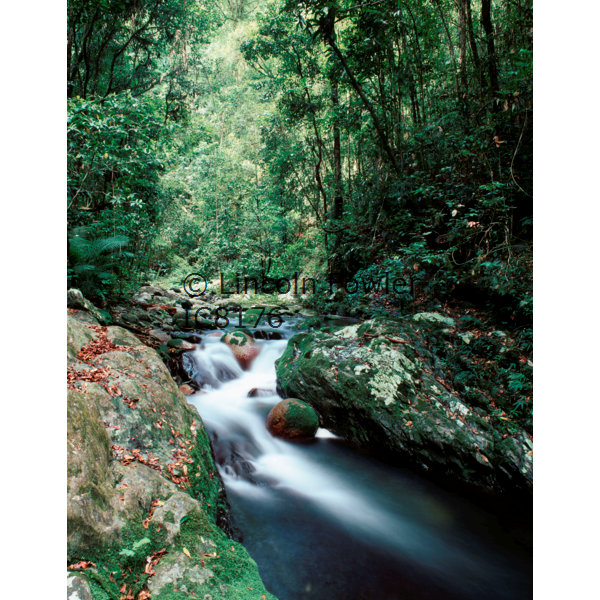 Rainforest Stream tropical rainforest North Queensland Australia
