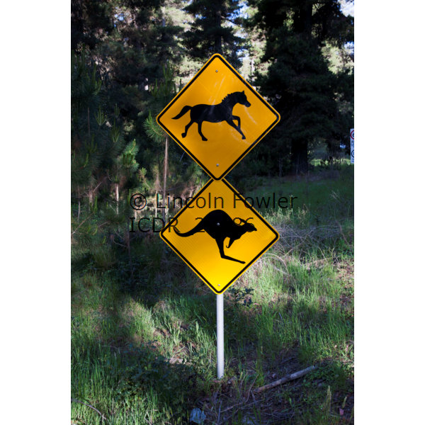 Horses and kangaroo road sign