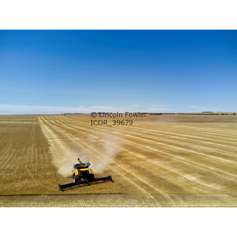 Combine harvester barley harvesting near lock South Australia
