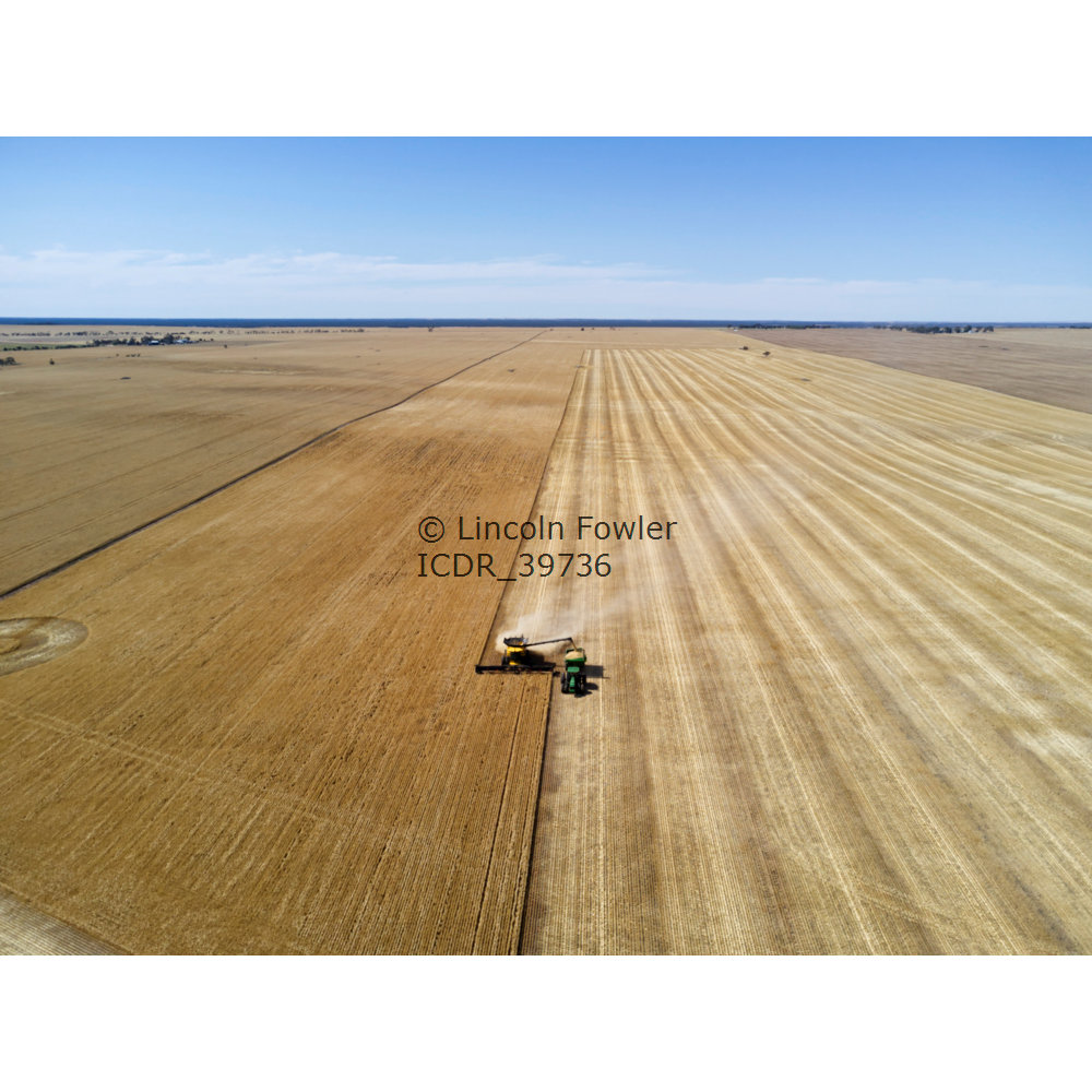Barley Harvesting with a modern wide comb combine harvester