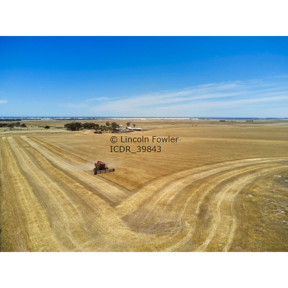 Barley grain harvesting South Australia