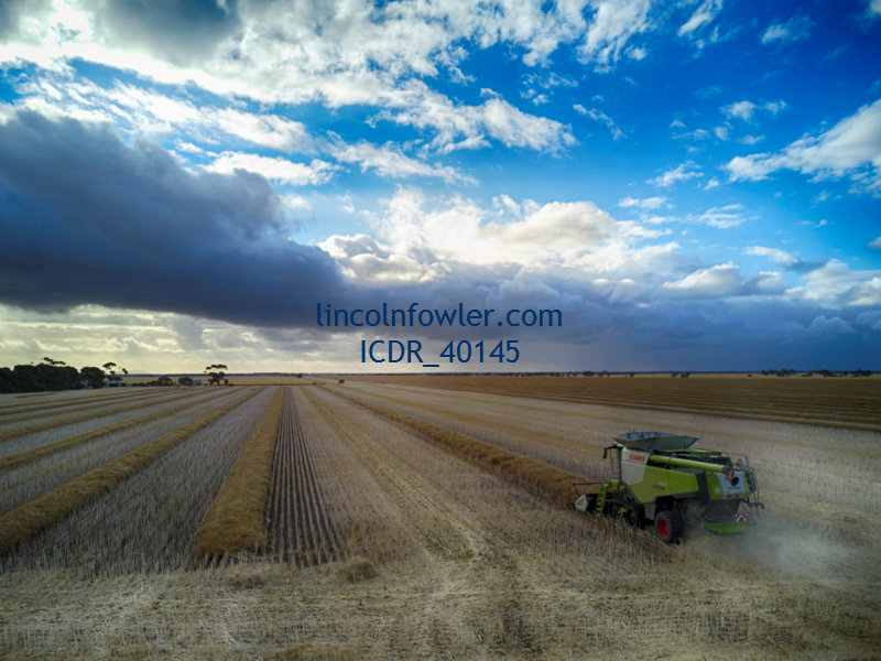 Canola Harvesting South Australia