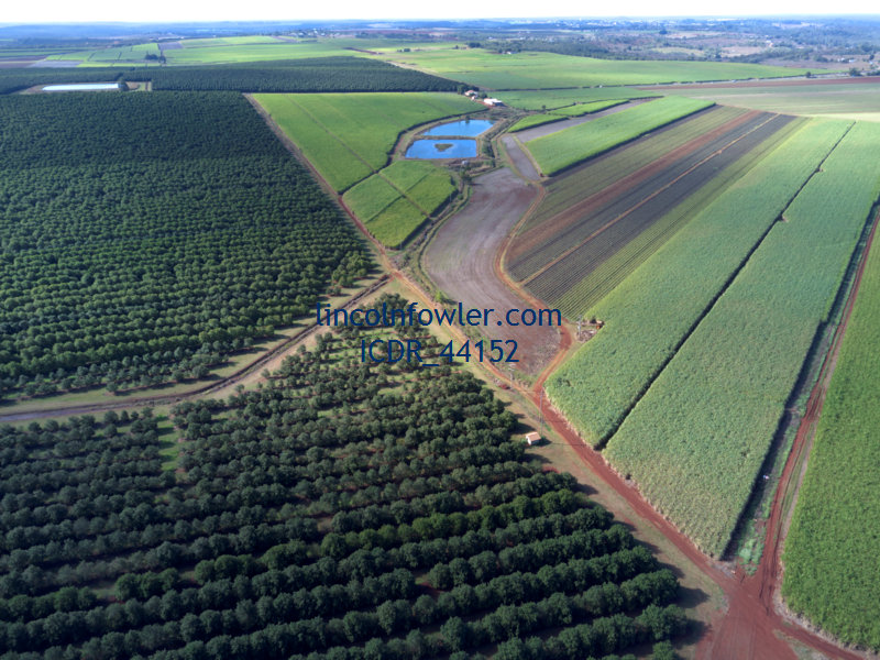 Macadamia nut tree plantation Queensland Australia