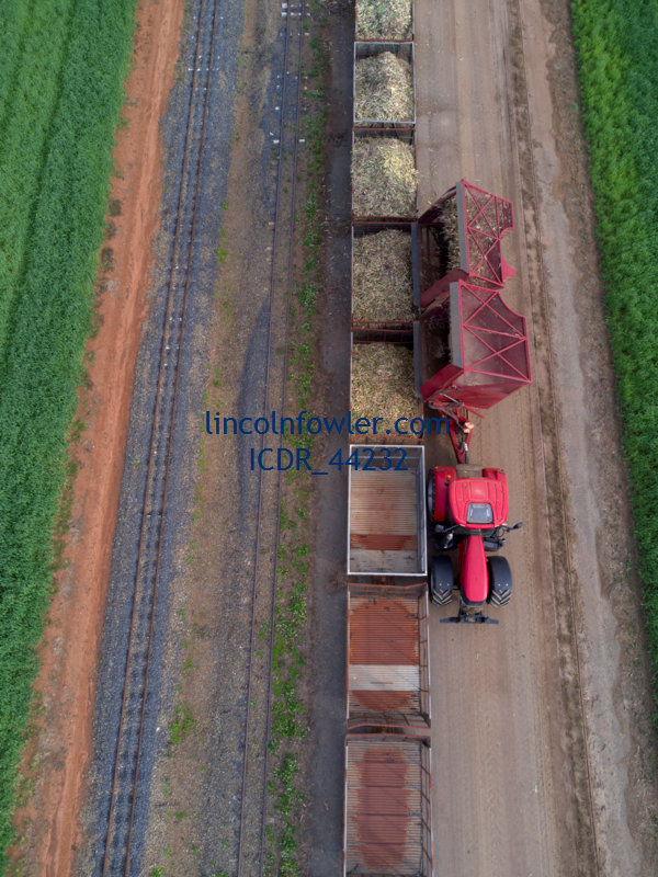 Loading cut sugarcane into railway wagons Queensland Australia