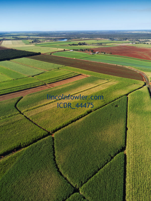 Aerial of sugar cane plantation farmland Childers Queensland Australia