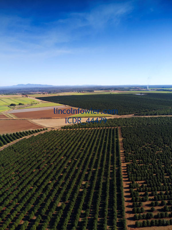Aerial of macadamia nut tree plantations Queensland Australia