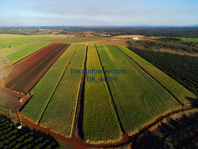 Aerial of sugar cane plantation Queensland Australia
