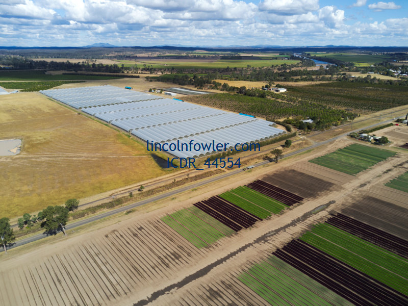 Hydroponic Farming of Blueberries Queensland Australia