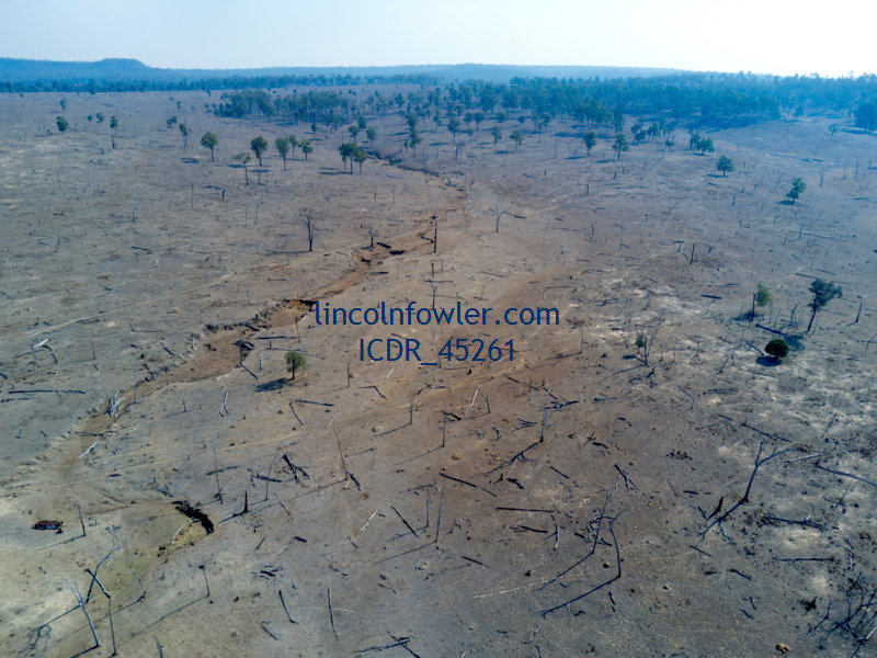 Land clearing for Cattle Queensland Australia
