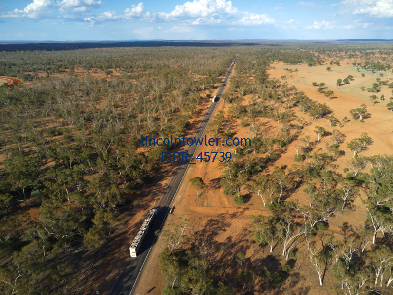 Cattle Livestock Roadtrains