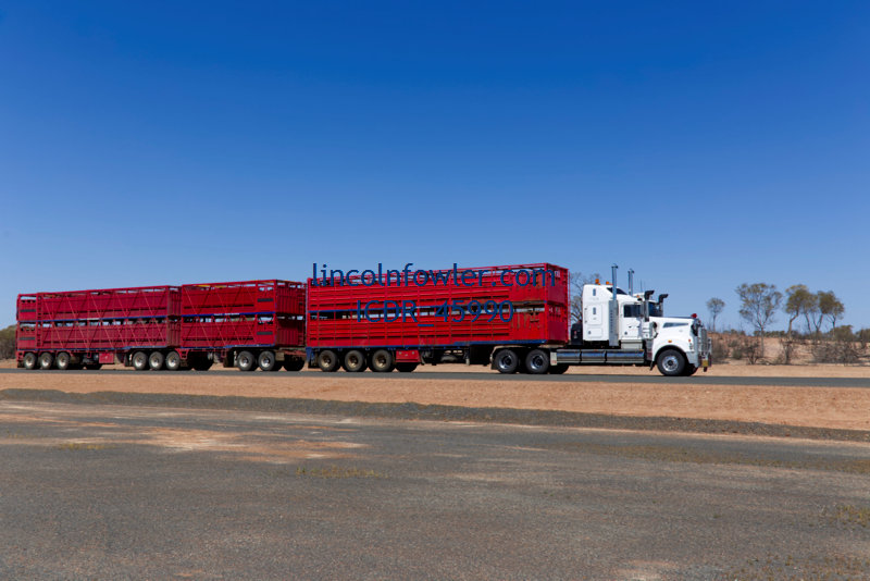 Livestock cattle road train Queensland Australia