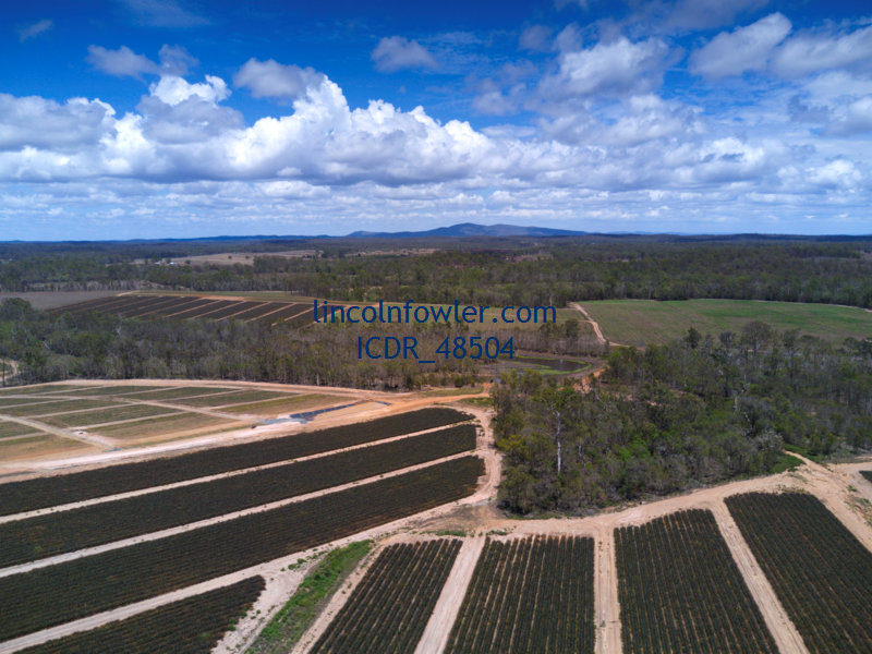 Pineapple Plantations Queensland Australia